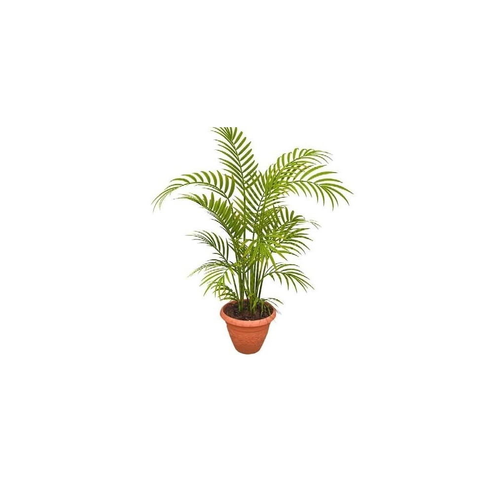 Buy Areca Palm Tree Air Purifier At Lowest Price