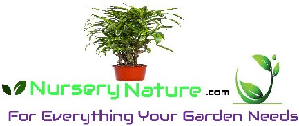 Nursery Nature logo
